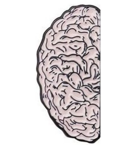 Pin Medio Cerebro